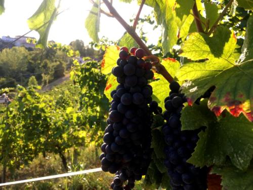 Malpaga Il Pinot Nero